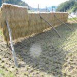 奥出雲食房のお米