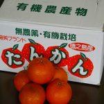 奄美ブランド果実・たんかんが届きました。