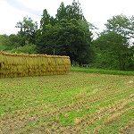 イベント稲刈りに参加してきました。