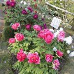 とっとり花回廊・・・・・花いっぱいで素敵でした・・・・