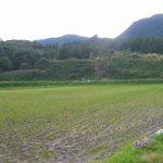 「えっちゃんの日本一のお米」の脱穀が終わりました。